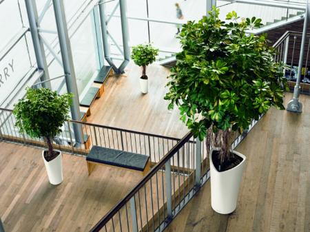 Diamond Nursery Indoor Plants A