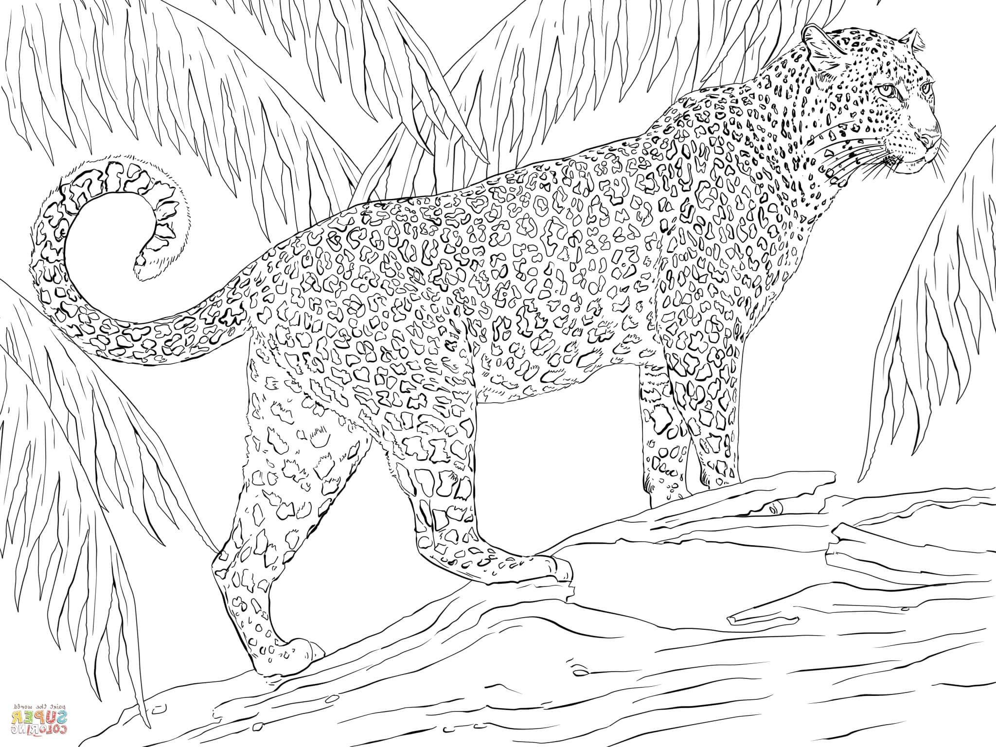 Jaguar Coloring Pages Zoo Animal Coloring Pages Jaguar Animal