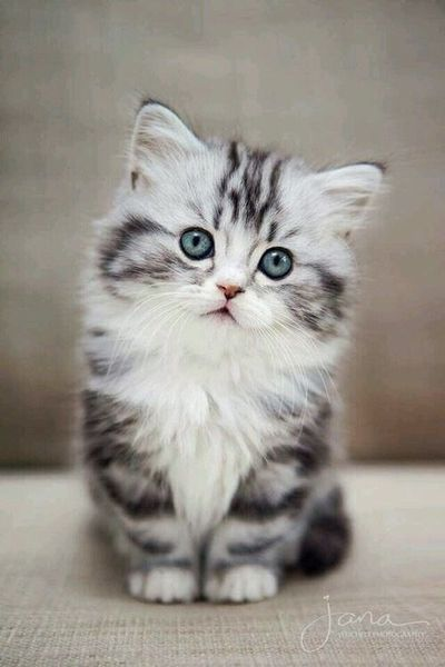 Pin By Phoenix On Meow B W In 2020 Kittens Cutest Kitten