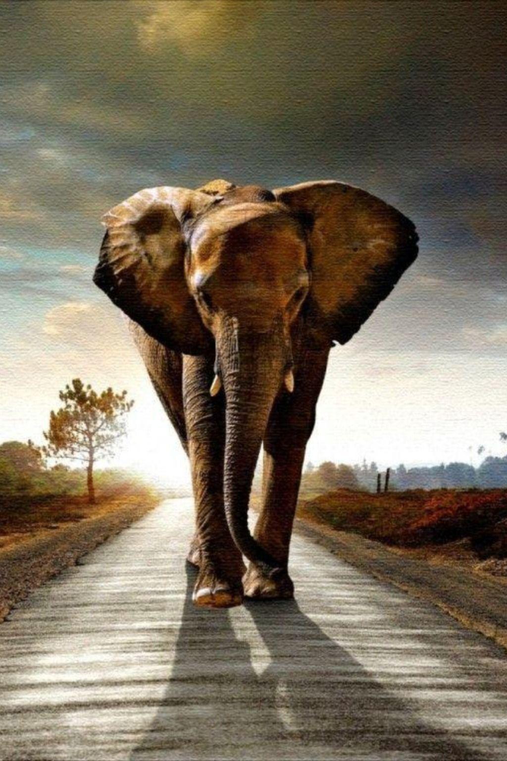 Elephant Wallpapers Elephant Iphone Wallpaper Wild Animal Wallpaper Elephant Wallpaper