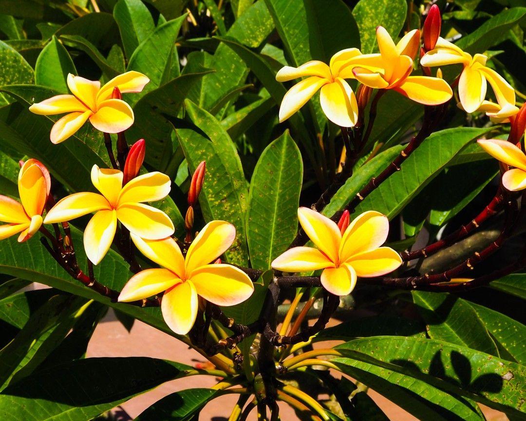[𝔸𝕥𝕖𝕝𝕚𝕖𝕣 𝕚𝕟𝕤𝕥𝕒𝕘𝕣𝕒𝕥𝕚𝕥𝕦𝕕𝕖] 🌈 - Les arbres en fleurs 💐 ici ou ailleurs ...⠀⠀⠀⠀⠀⠀⠀⠀⠀ ---------------------------------------------------- ⠀⠀⠀⠀⠀⠀⠀⠀⠀⠀⠀⠀⠀⠀⠀⠀⠀⠀ #365joursdinspiration #atelierinstagratitude #instaflowers #coursphotographie #unephotoparjour #reunionnaisdumonde #3kifsparjour #defiphoto #lovetahiti