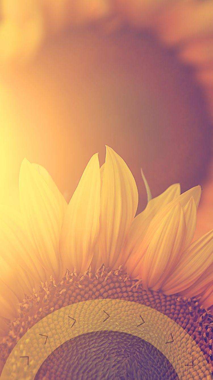 Tap And Get The Free App Lockscreens Art Creative Sun Flower Summe Fondos De Pantalla Pinas Fondos De Pantalla Iphone Tumblr Fondo De Pantalla Iphone Tumblr