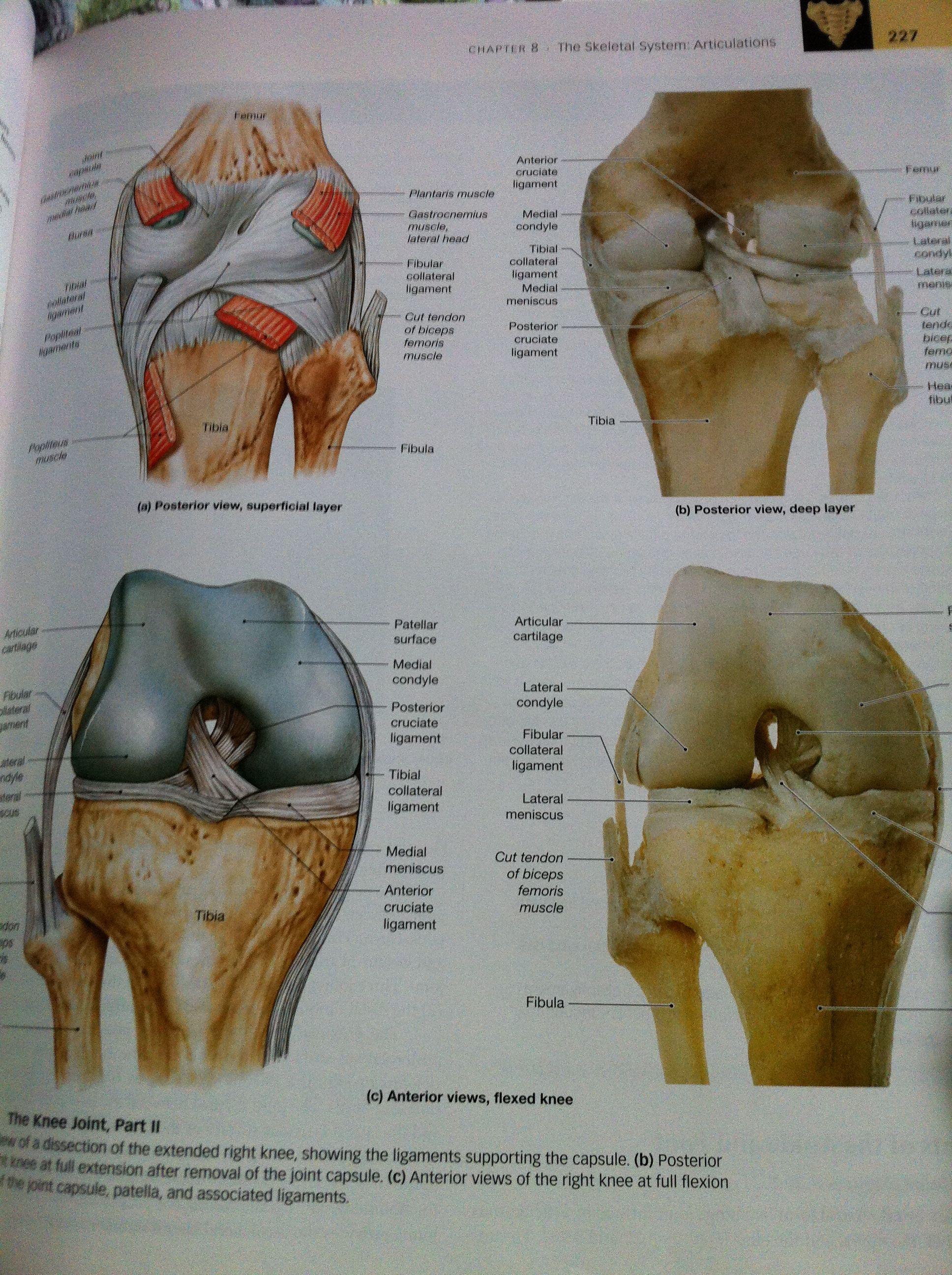 Human Anatomy 6th Edition Martini Timmons Tallitsch Kates