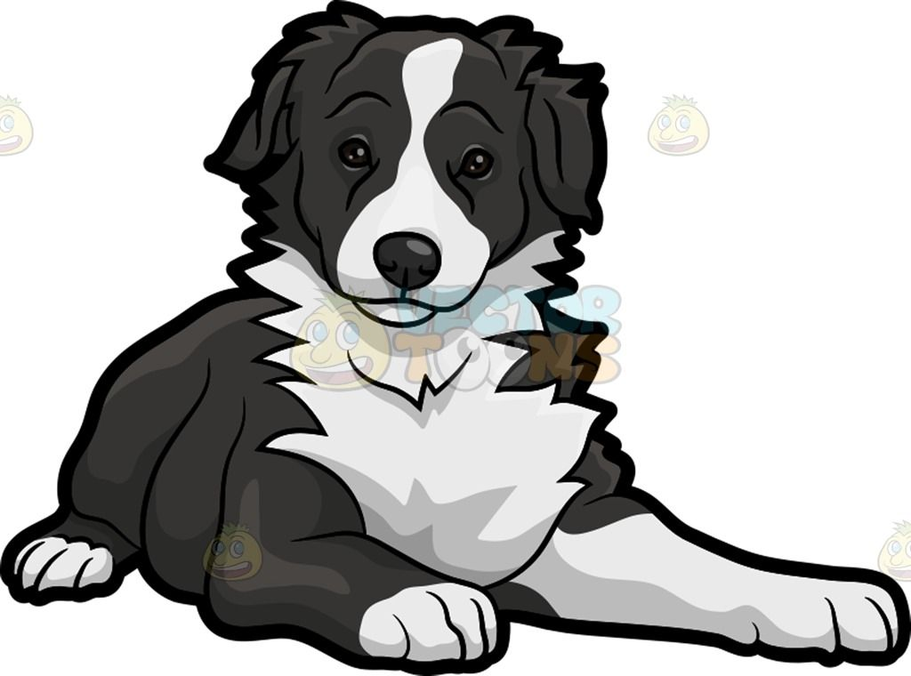 An Adorable Border Collie Dog Dog Drawing Cartoon Dog Dog Clip Art