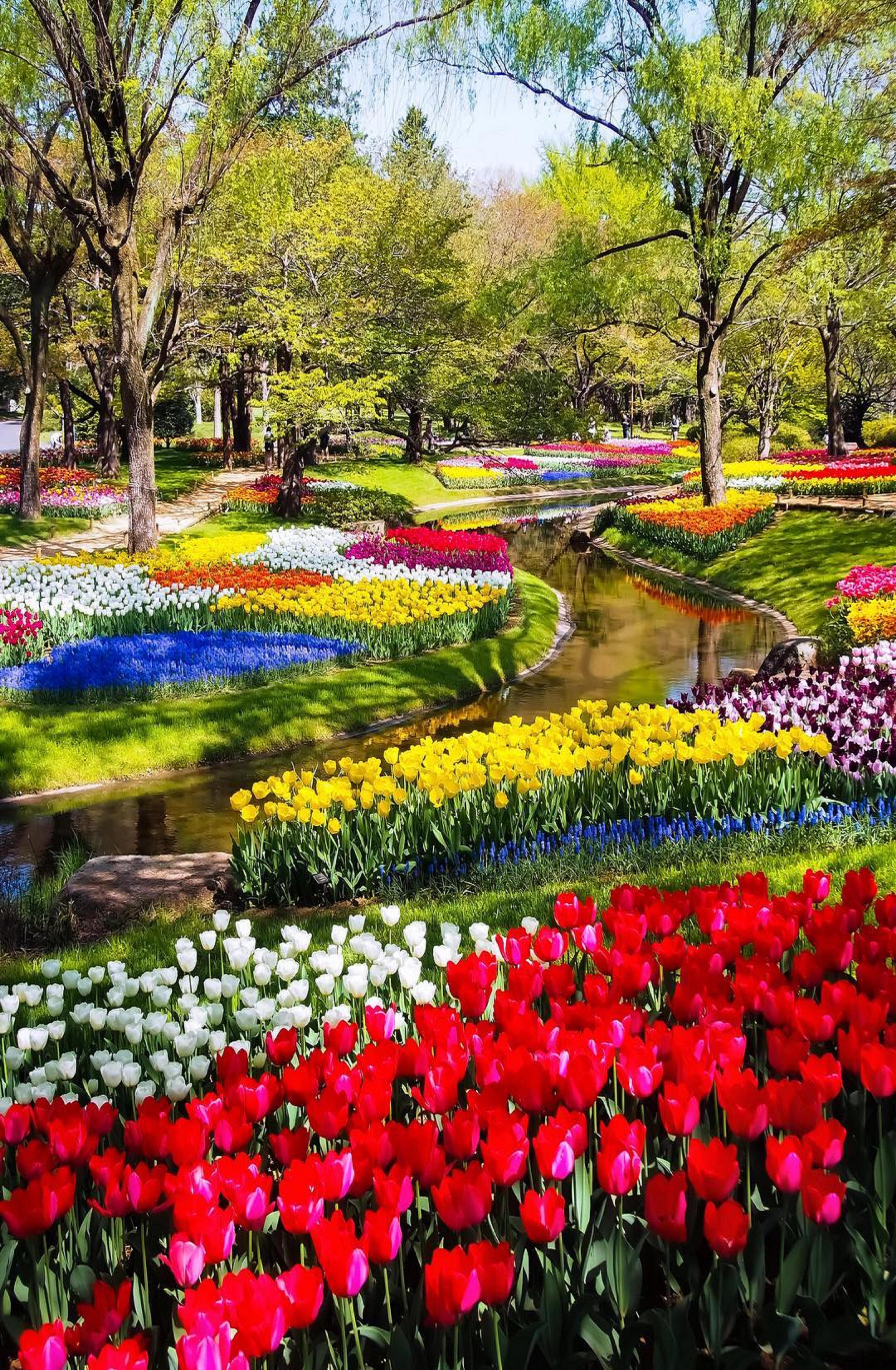 735343845232f694b6d0bbe8b87d82dc - Tulip Top Gardens 2019 Tulip Top Gardens 5 October