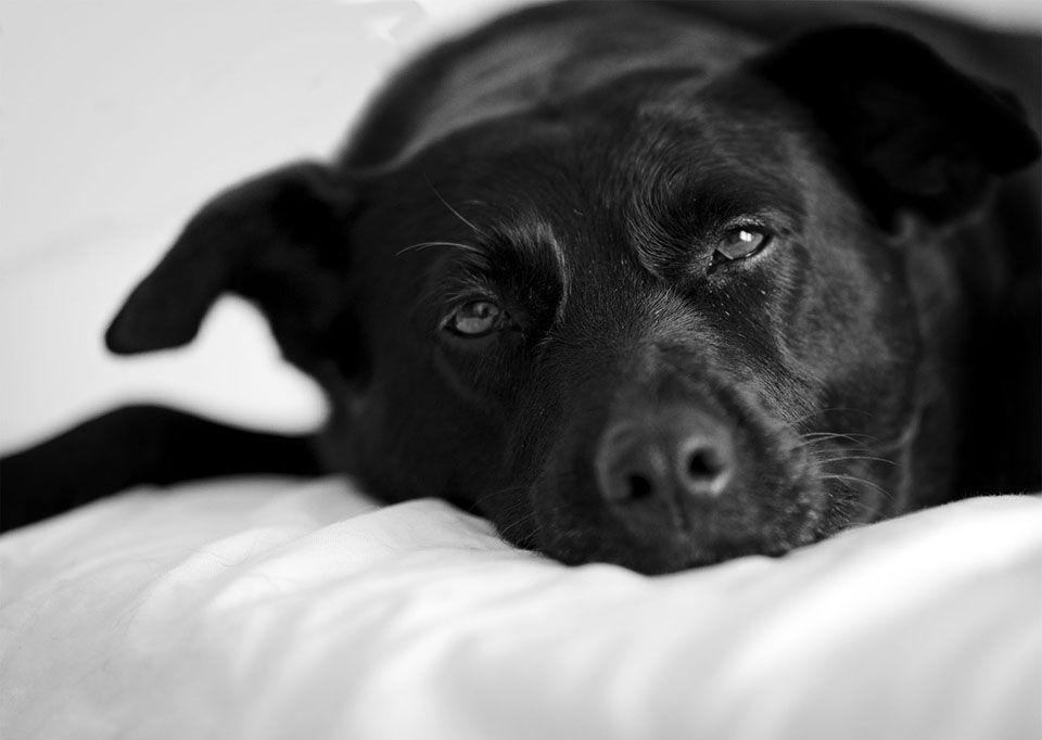 Black Labrador Terrier Mix Rescue Dog Pet Photography Naples Florida Animal Photography Dogs Animal Photography Rescue Dogs