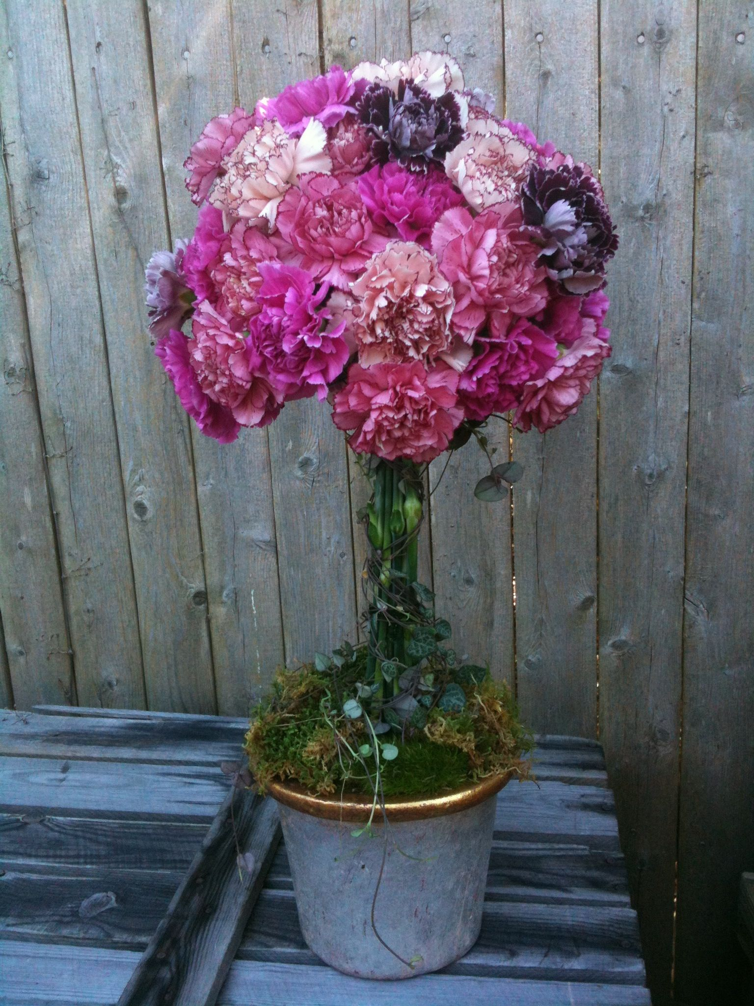 Carnations need several hours of full sunlight daily. They should be kept on the moist side, but not over watered as this may cause them to turn yellow. Any dead flowers should be removed, this will allow for the rest of the flowers to continue blooming.