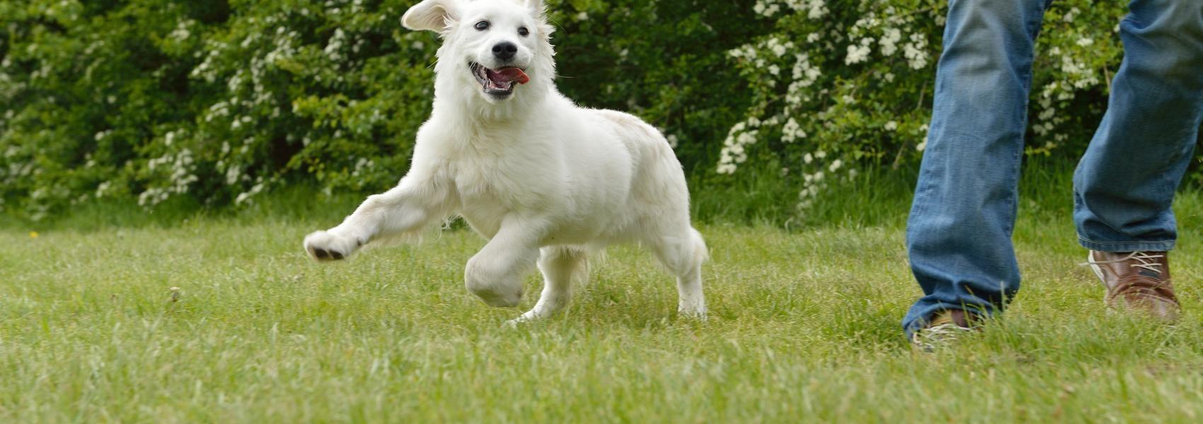 Hondenzones honden natuurgebied natuur