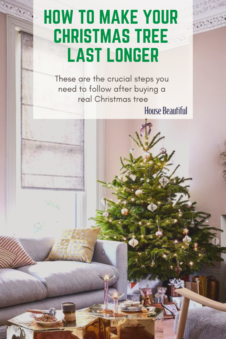 Crucial Steps You Need To Follow After Buying A Real Christmas Tree Christmas Tree Real Christmas Tree Holiday Christmas Tree