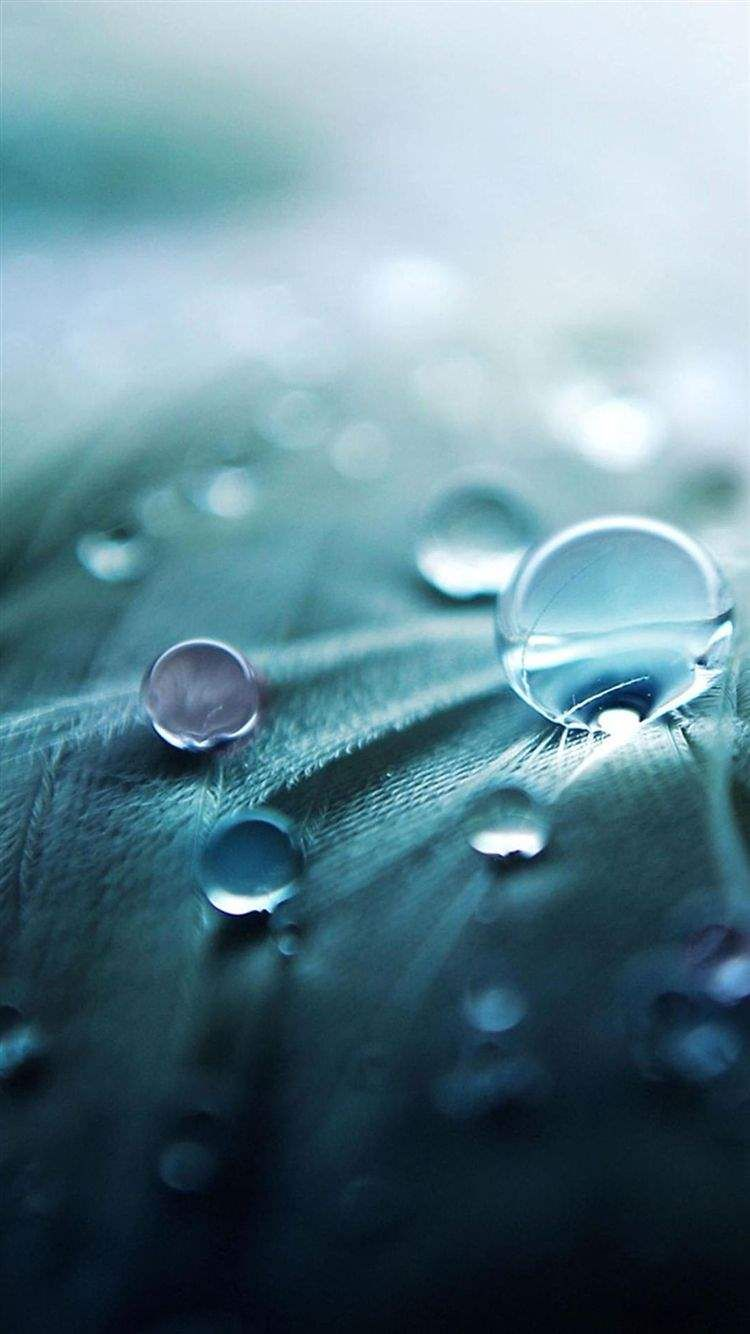 Samsung S6 S6 Plus S6 Edge Note 4 Note 5 And Note Edge Wallpapers Water Droplets Photography Retina Wallpaper Macro Photography