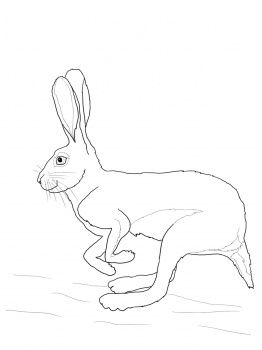 Running Desert Hare Coloring Pages Free Printable Coloring Pages Printable Coloring Pages