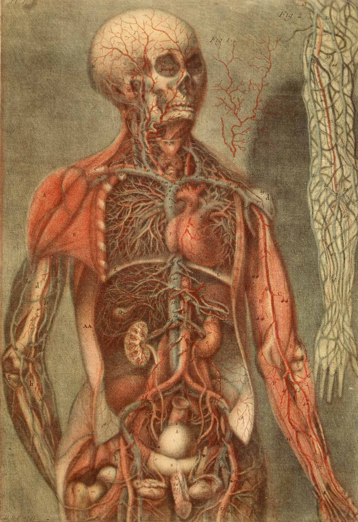 The History Of Anatomy Jacques Fabien Gautier Dagoty Paintings