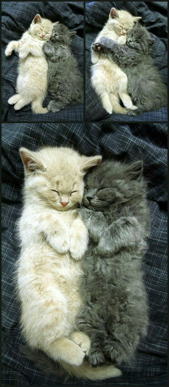 Pin By Jim On Cute Animals Kittens Cutest Cats And Kittens