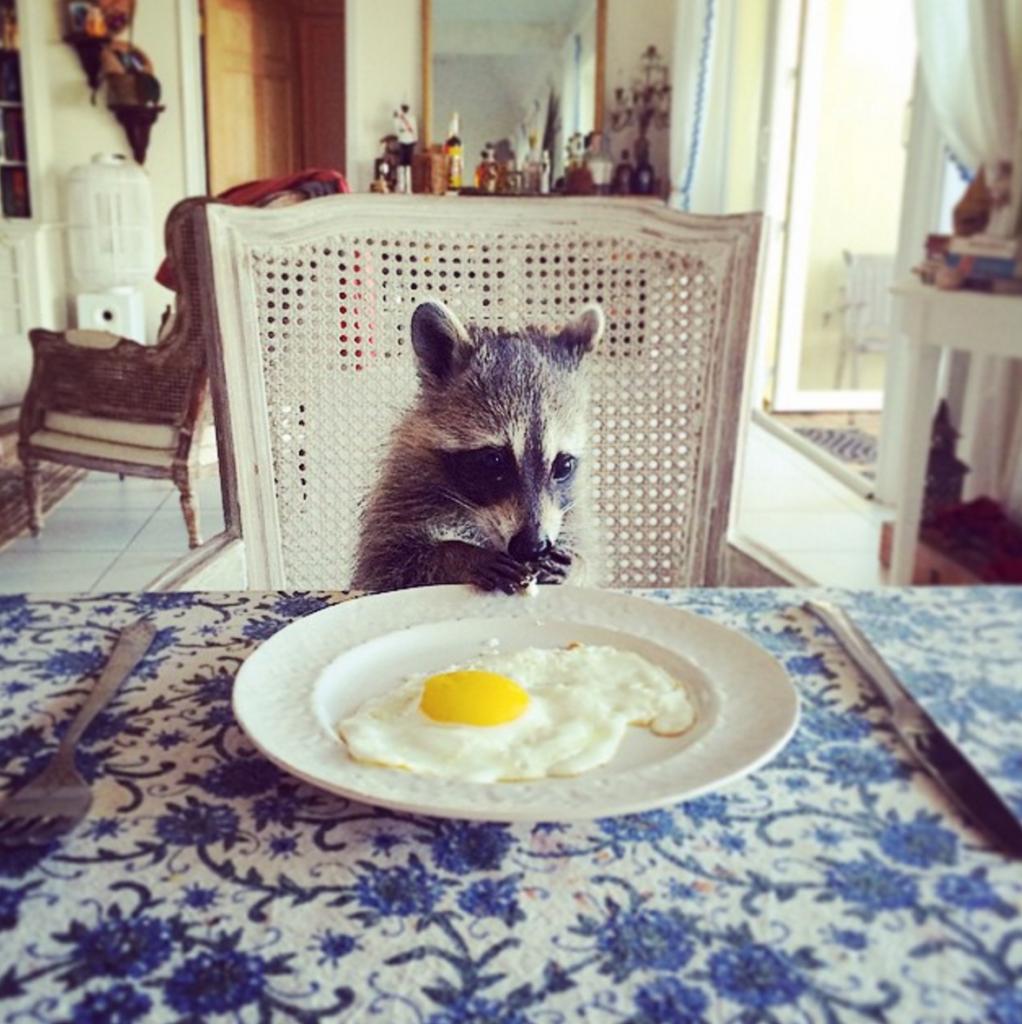Картинка доброго утра лисы смешная с завтраком, картинки