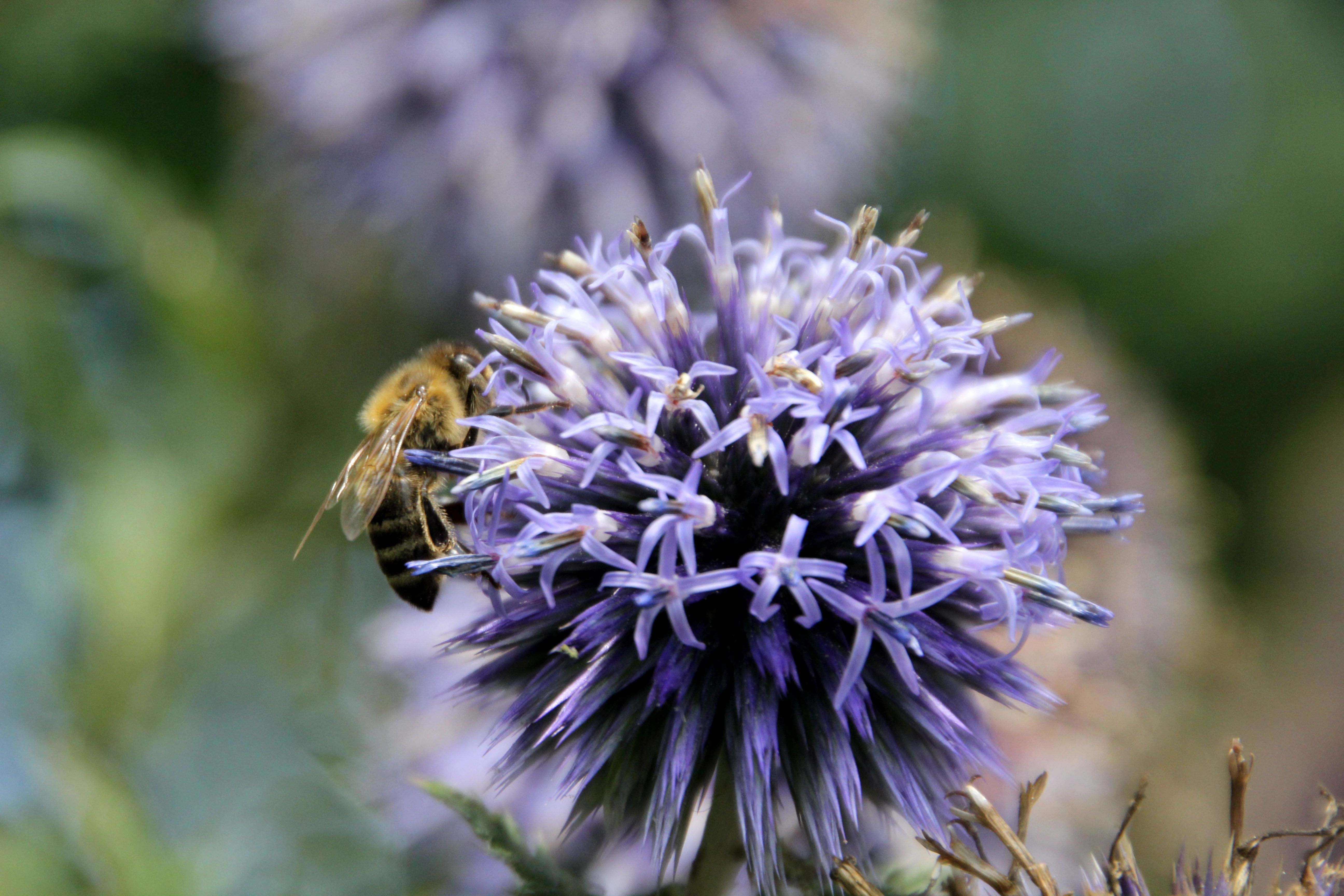 Hallo Welt, Lichtfarbenspiel-Blog Biene Blume Garten Fotografie
