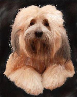 幸運をもたらす と言われた犬 おじゃかんばん Dog Safety 倶楽部 のファンがつくるサイト Tibetan Terrier Dog Breeds Dogs