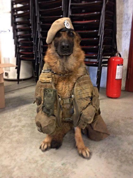 German Shepherd Military War K9 Hero