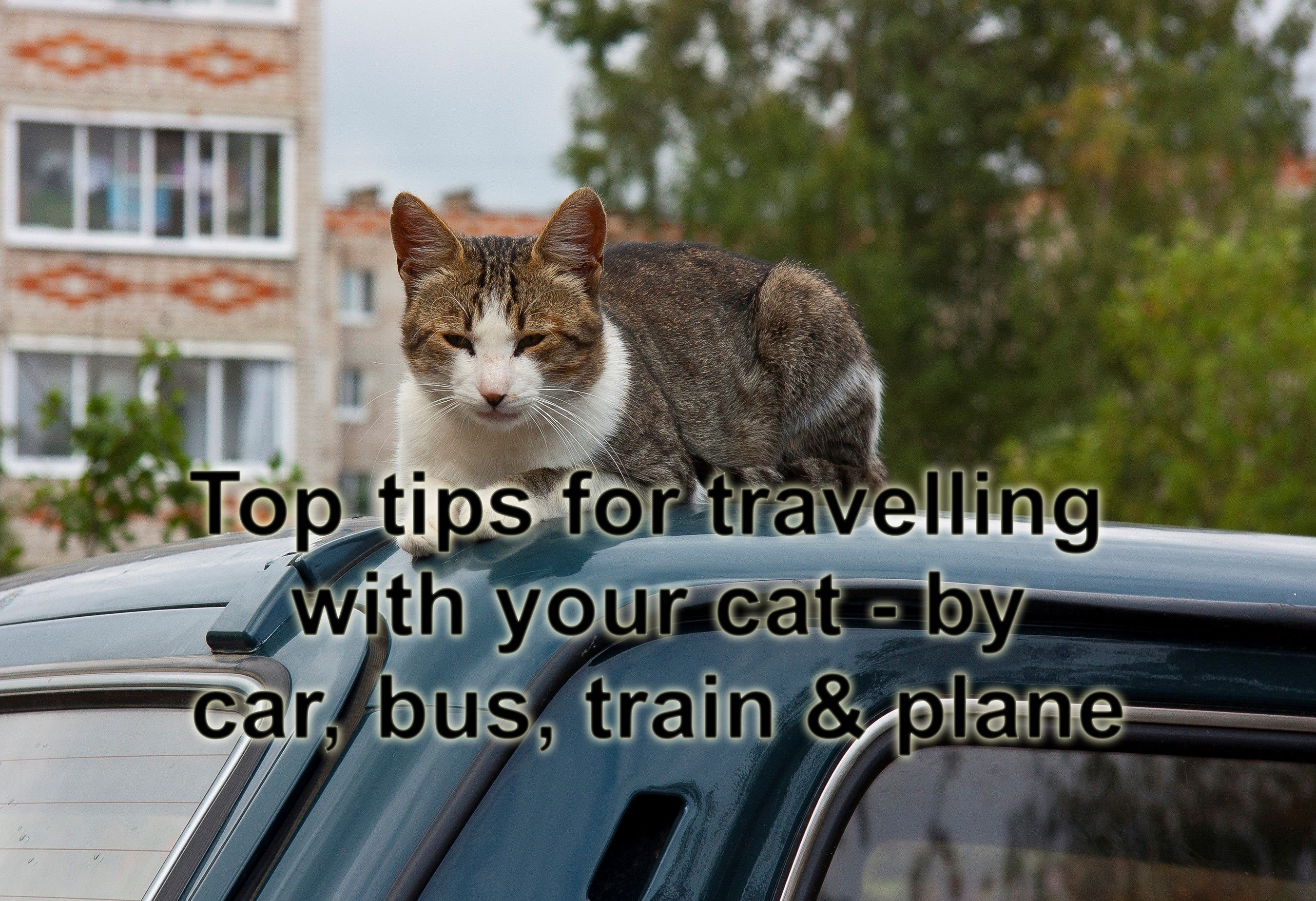Travelling With Your Cat Cats Train Travel