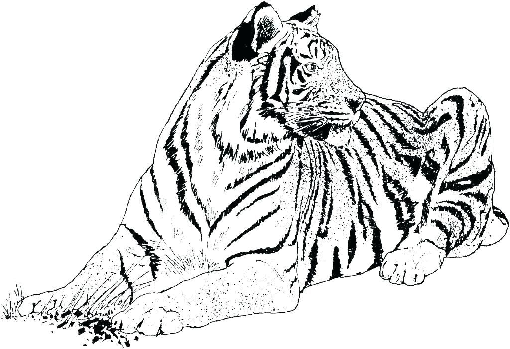 Wild Cat Coloring Pages M9734 Big Cat Coloring Pages Rescue Wild