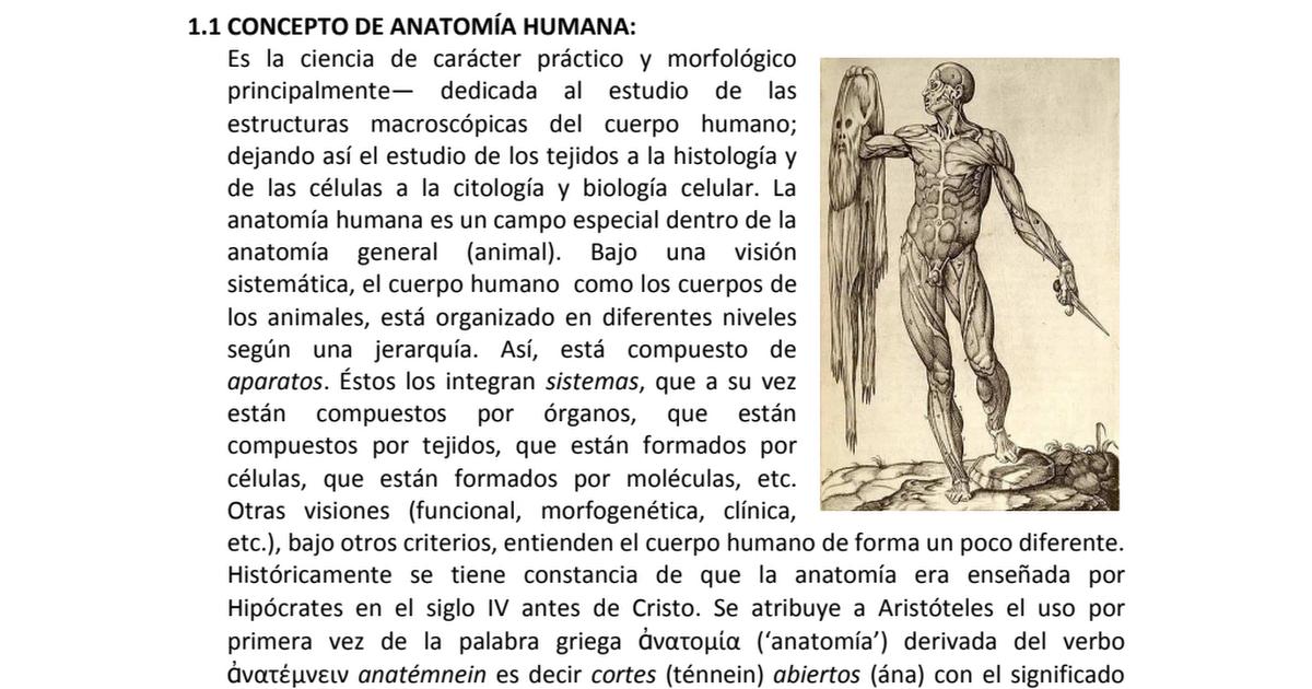 Increíble Estudiar La Anatomía En Línea Embellecimiento - Anatomía ...