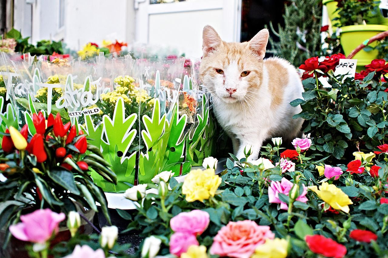 Ways to Keep Cats Out of Your Yard or Garden | Cat ...