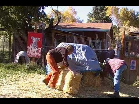 Build A Straw Bale House For Your Dog In Two Minutes Outdoor Dog