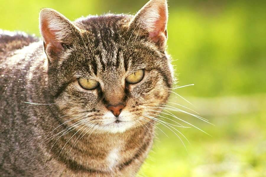 I Gatti Tigrati Sono I Miei Preferiti Insieme Ai Gatti Bianchi E