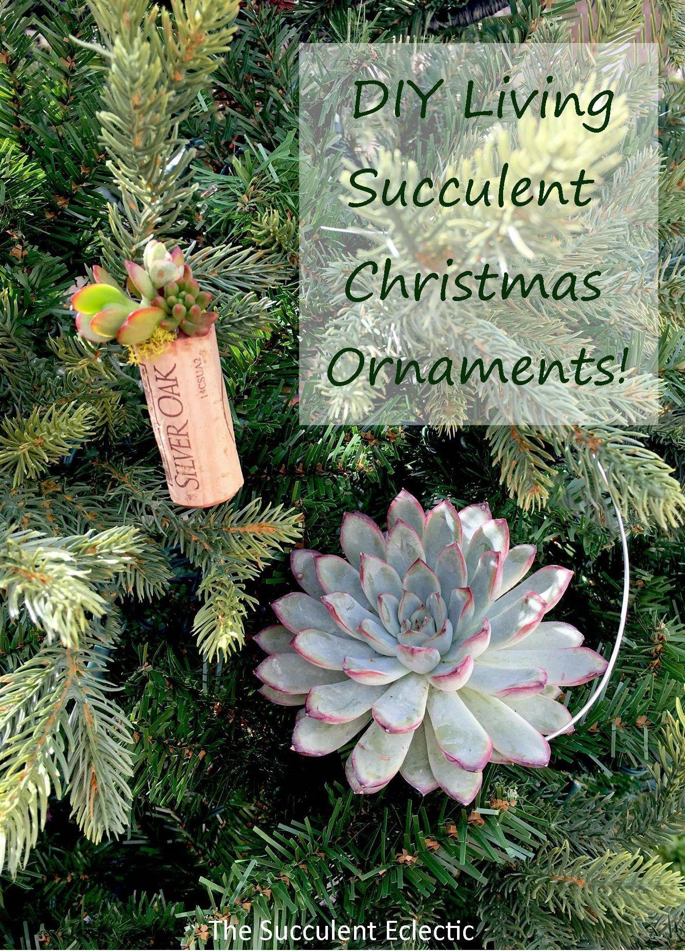 DIY Hanging Succulent Christmas Ornaments Christmas