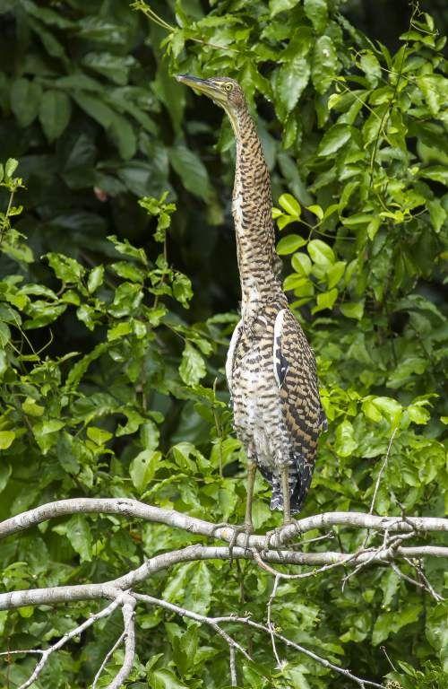 Pin De Johnkiew En удивительные птицы Animales Cuero