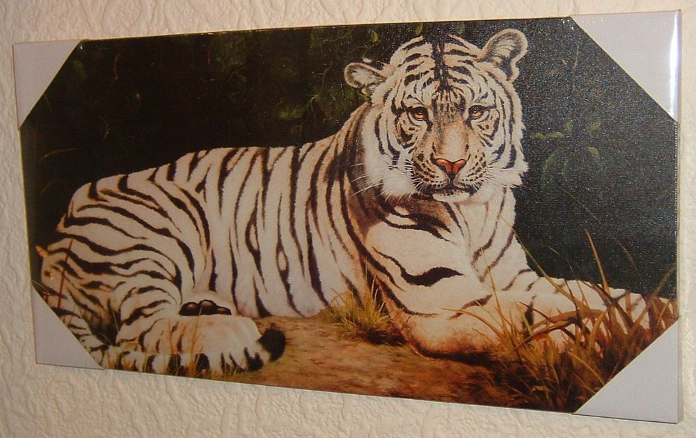 White Siberian Tiger | beautiful-white-siberian-tiger-big-cat-white-tiger-canvas-art-picture ...