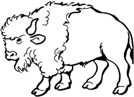 Buffalo Coloring Pages 101coloringpages Com