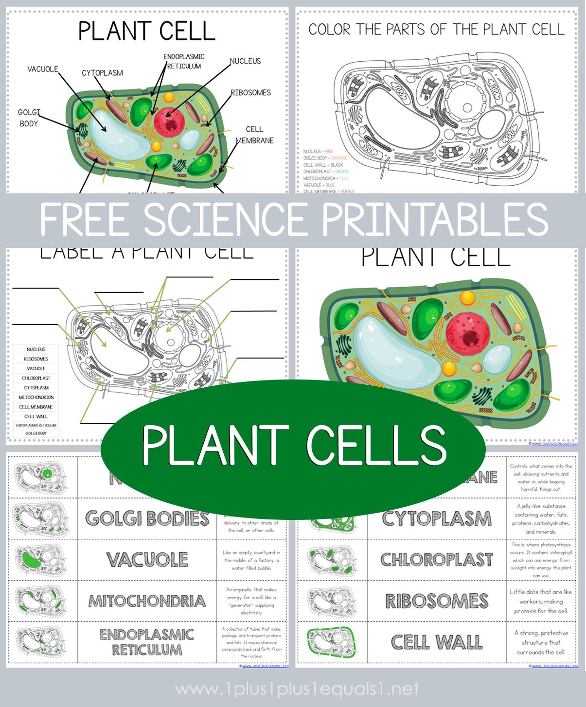 Free Science Printables