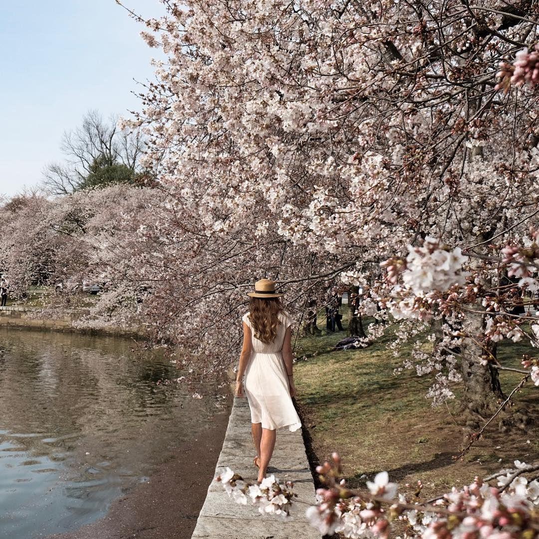 823 Me Gusta 54 Comentarios Danielle Delouche Cazier Wanderful Gypsea En Instagram Sprung Off Spri Instagram Asian Cherry Blossom Festival Garden Girls