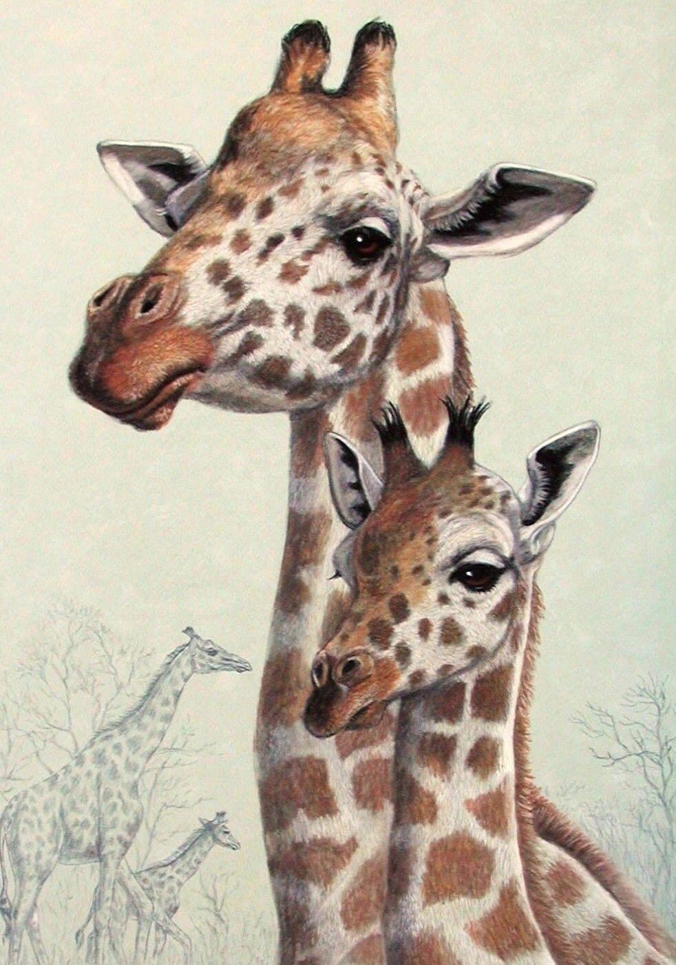 Февраля открытки, картинки жирафов для срисовки