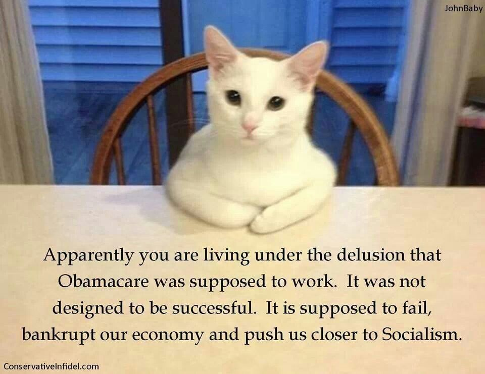 Perhaps the cute kitty can convince y'all that The Affordable Care Act is nothing of the sort...
