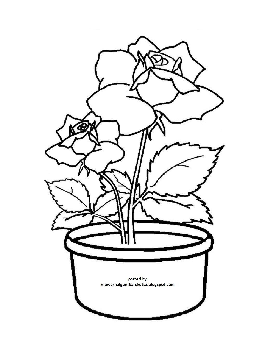 Contoh Gambar Bunga Mawar Yang Mudah Digambar