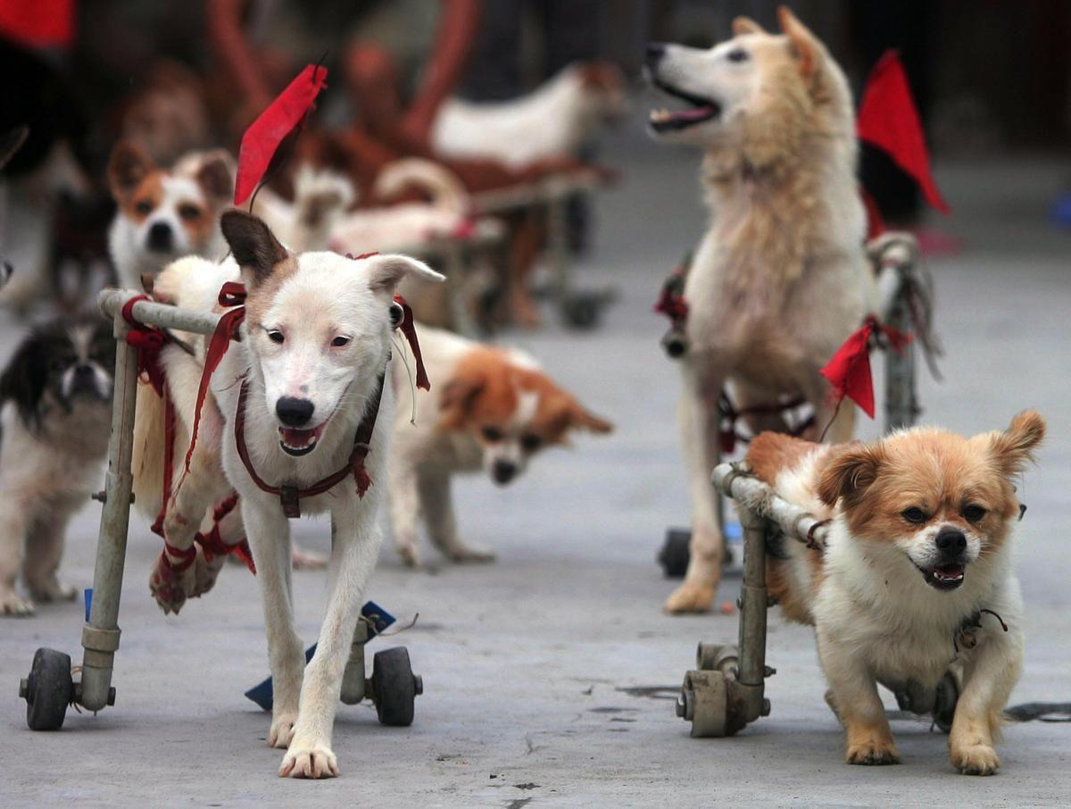 Carritos Para Perros Invalidos Que Gran Invento Perros Stuffed Animals Animales Felices