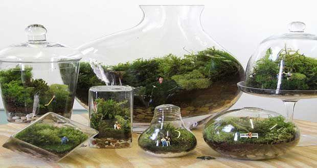 un terrarium la touche d co pour les plantes dans la. Black Bedroom Furniture Sets. Home Design Ideas