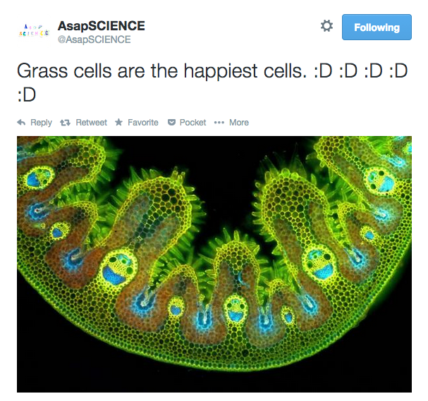 Grass cells are the happiest cells. :D   @AsapSCIENCE