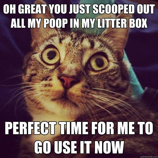 Pin by Josh Hamilton on HAHA Funny | Funny cat memes, Cat memes, Cute cat  memes