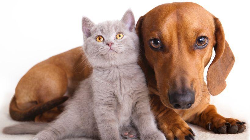 AllergikerKatzen, Hunde & Co. • Diese Haustiere sind
