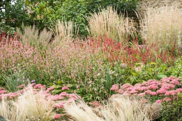 Nassella tenuissima sedum 39 autumn joy 39 persicaria for Ornamental grass border design