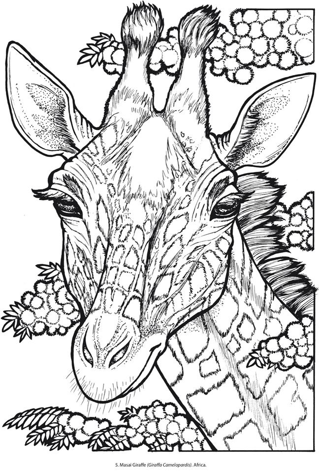 Explore Giraffe Coloring Pages Adult And More