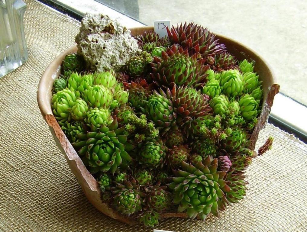 Easy Flower Pot Ideas for Garden  Broken Flower Pot Ideas   New. Easy Flower Pot Ideas for Garden  Broken Flower Pot Ideas   New