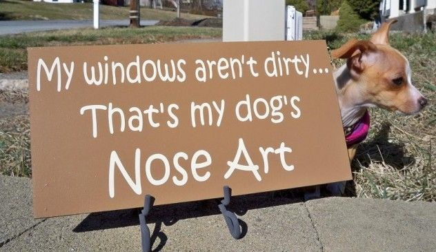 Oldies 95.7 Facebook post -  You'll NEVER get those nose marks off the patio door. This pic encourages you to just own it