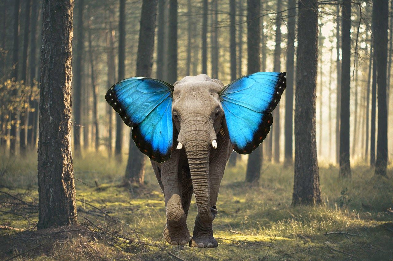 Elephant With Butterfly Ears Other Randoms Pinterest