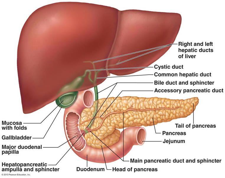 The Gallbladder Flush http://deepdownwellness.com/store/gallbladder ...