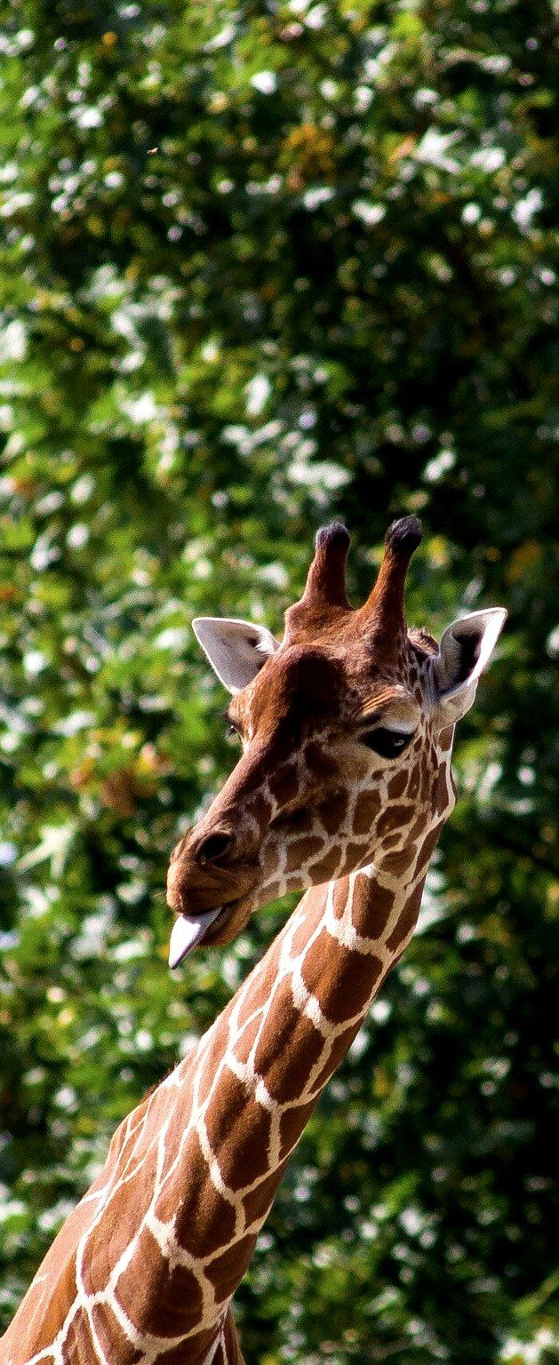 Top 10 Zoos In The USA To Take Your Kids To Best zoos in