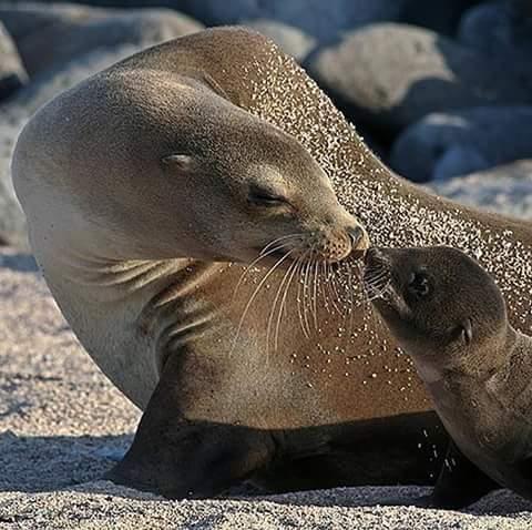 mamma foca..