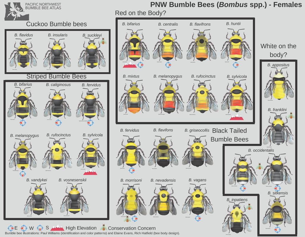 Pacific Northwest Bumblebee Atlas